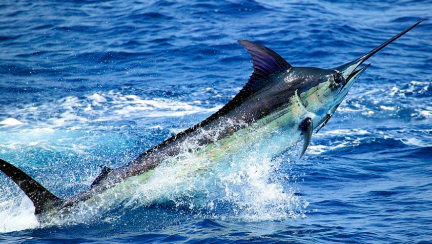 Viaje para practicar pesca deportiva en un yate | Noviembre 2019