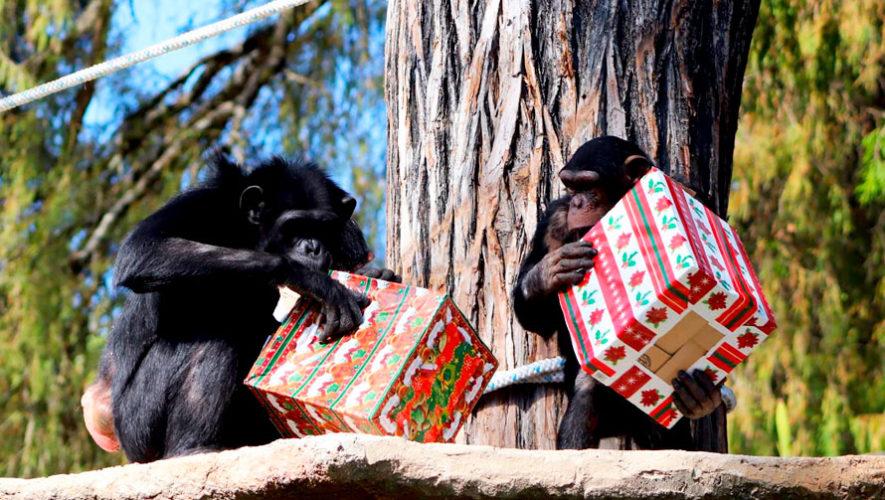 Celebración de Navidad en el Zoológico La Aurora   Diciembre 2019