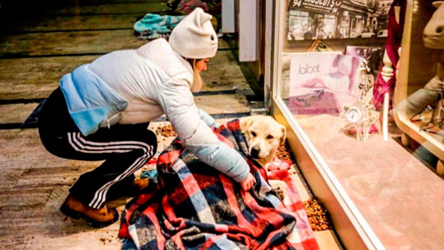 Dona frazadas y ropa para perritos rescatados en la Ciudad de Guatemala en diciembre 2019