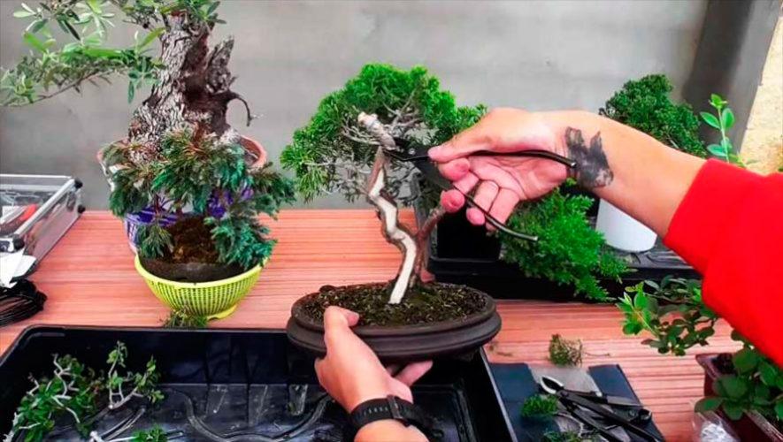 Taller de bonsai para principiantes en Zona 10 | Enero 2020