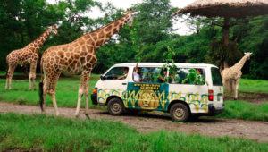 Viaje familiar a Auto Safari Chapín | Enero 2020