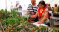 Congreso Latinoamericano de Cactus y Suculentas en Guatemala | Marzo 2020