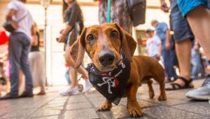 Fiesta para perros adoptados, Ciudad de Guatemala | Enero 2020