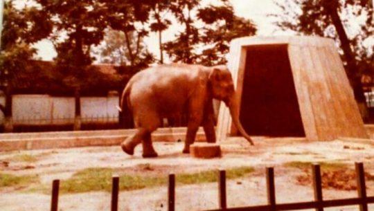 La mocosita zoológico la aurora en guatemala