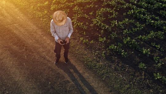 Microsoft y Banrural aliados en impulsar la agricultura de precisión en Guatemala