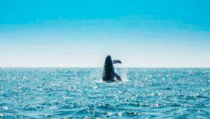 Viaje para ver ballenas, delfines y fauna marina | Enero 2020