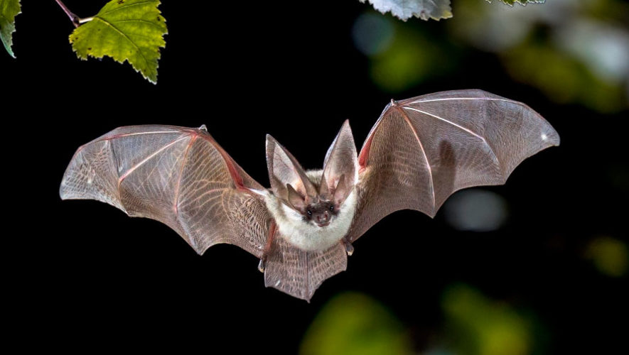 Actividades gratuitas para aprender acerca de los murciélagos | Febrero 2020