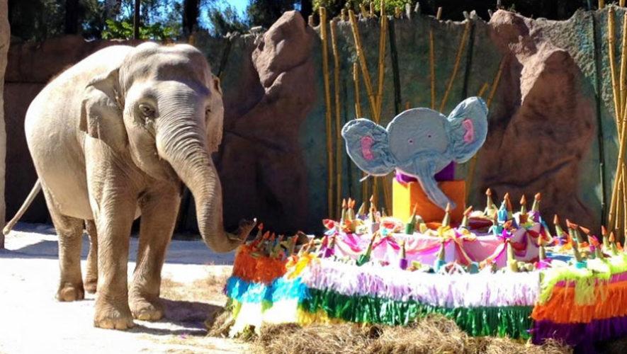 Celebración del cumpleaños de Trompita en el zoológico   Febrero 2020