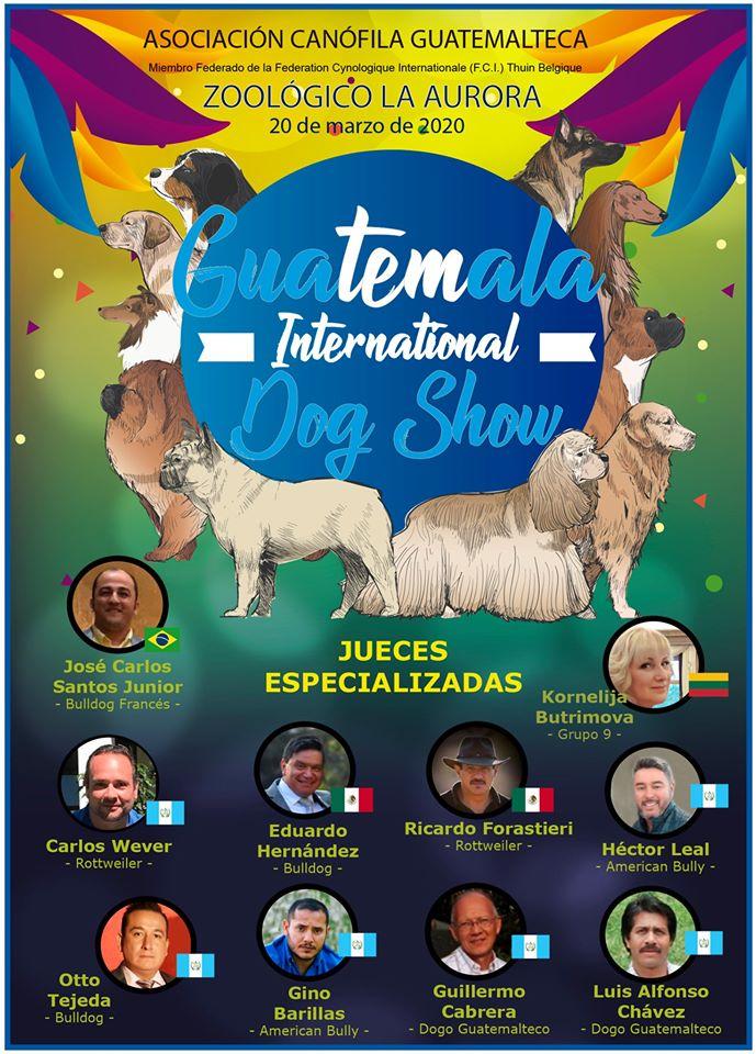 (Foto: Acangua Asociación Canófila Guatemalteca)
