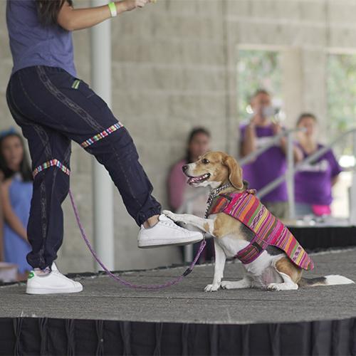 Pet Fest 2020, festival para mascotas en Guatemala | Marzo 2020