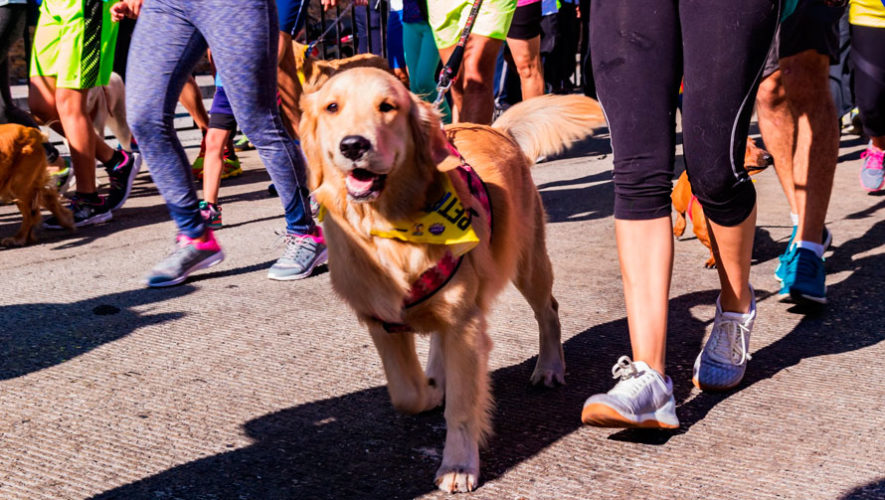 Pet Run, carrera familiar con mascotas en Mixco | Marzo 2020