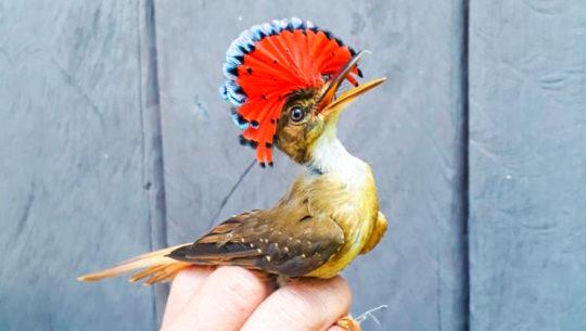 Registran especies de aves nunca antes vistas en Área Protegida Bocas del Polochic