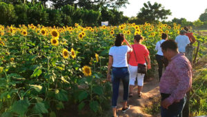 Viaje a la finca de girasoles en Izabal | Marzo 2020