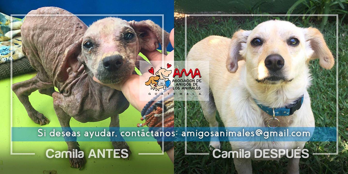 (Foto: AMA Asociación de Amigos de los Animales)