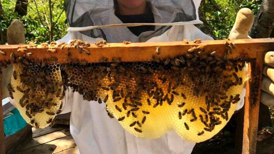 Tour virtual por el santuario de abejas en Guatemala | Marzo 2020
