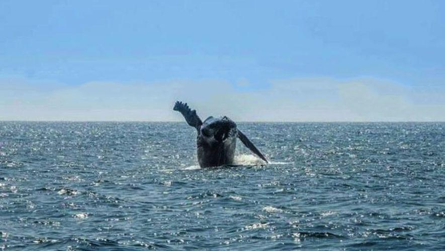 Viaje de avistamiento de ballenas jorobadas en Guatemala | Marzo 2020