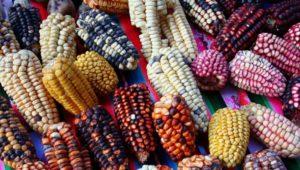 Conferencia virtual acerca del origen de la gastronomía de Mesoamérica | Abril 2020