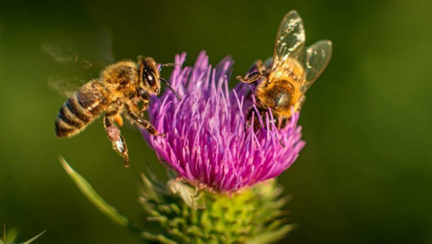 Taller en línea para aprender sobre las abejas | Abril 2020