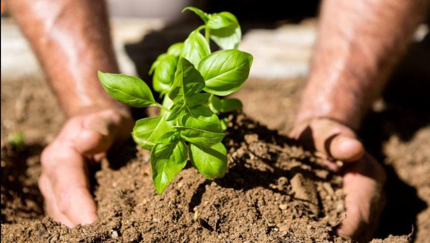 Taller virtual para aprender a crear un huerto en casa | Abril 2020