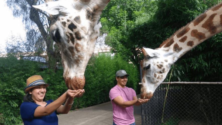 COVID-19 Apoya al Zoológico La Aurora comprando Tours VIP en preventa