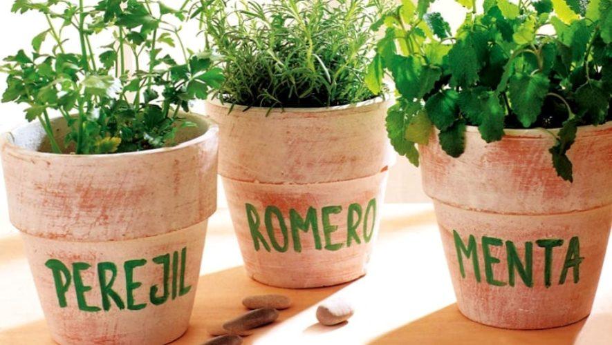 Curso virtual para aprender a cultivar plantas medicinales | Mayo 2020