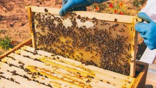 El primer santuario natural de abejas en Guatemala