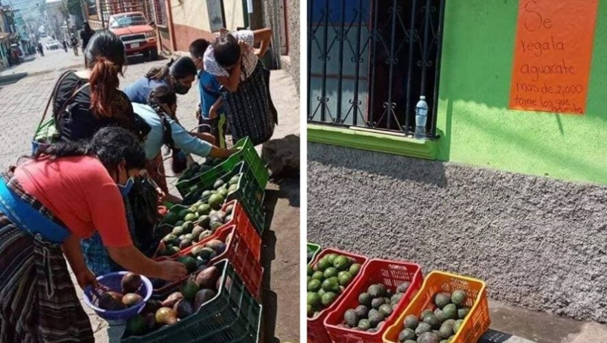 Familia regaló más de 2,000 aguacates a pobladores de San Lucas Tolimán, Sololá
