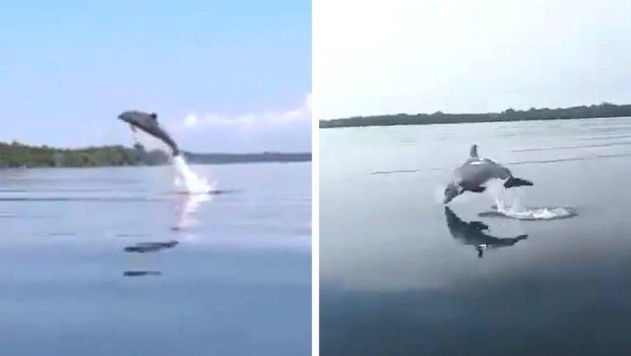 Grupo de delfines fueron captados en Punta de Manabique, Izabal