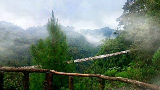 Los árboles gigantes que adornan el bosque nuboso de Jalapa