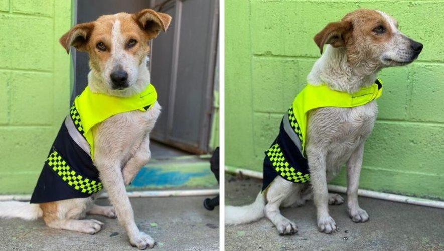 PMT del Tejar, Chimaltenango, adoptó a una perrita sin hogar como parte de su equipo