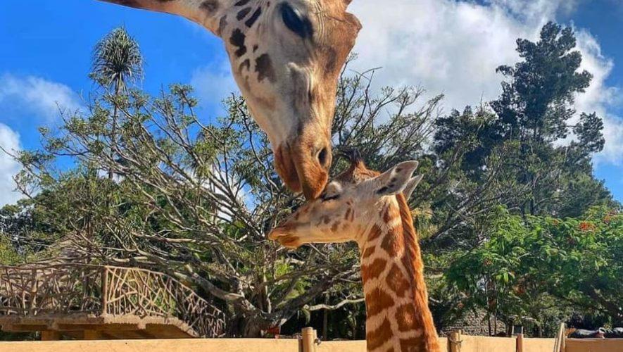 Recorrido virtual por el Zoológico La Aurora | Mayo 2020