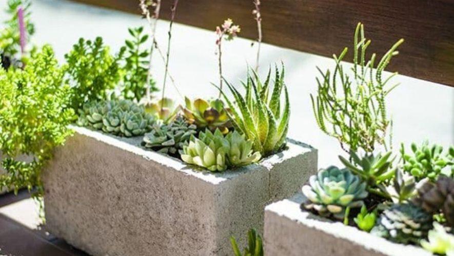 Taller virtual para aprender a elaborar un jardín en casa | Junio 2020