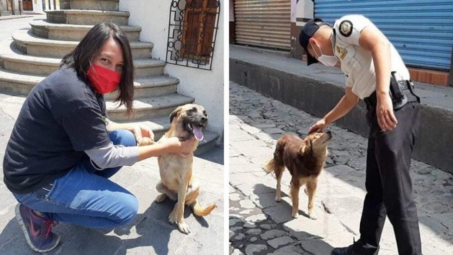 The DOX Project, asociación brindó alimentos a perros sin hogar en Quetzaltenango