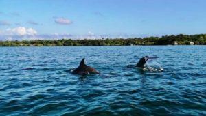 Conferencia virtual en celebración al Día Mundial de los Océanos | Junio 2020