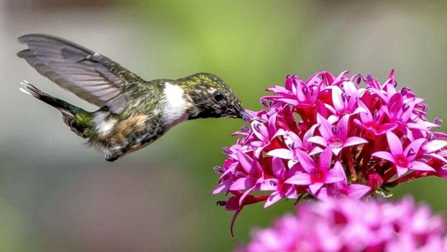 Curso virtual para aprender a observar aves desde casa | Junio 2020