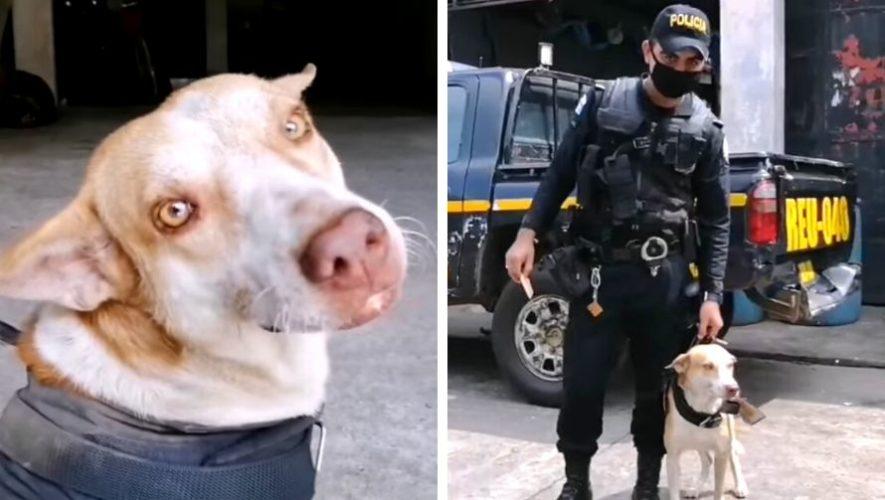Firu 34-11, perrito es adoptado por la Policía Nacional Civil deRetalhuleu