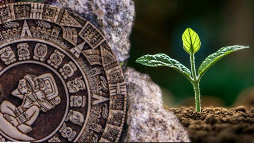 Taller de cultivo y su conexión con el calendario lunar maya   Junio 2020
