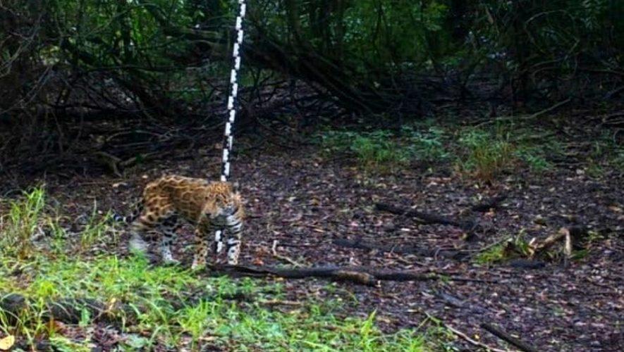 Animales salvajes captados con cámaras trampa en el Parque Nacional Tikal