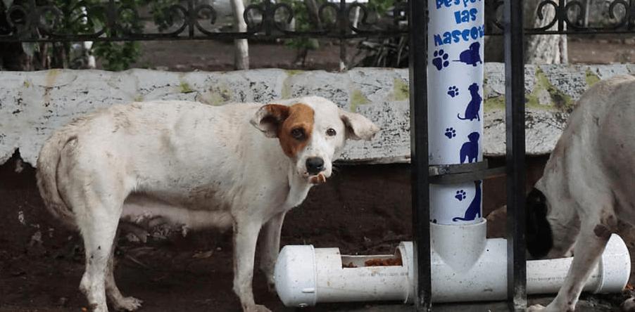 Comedores para perros sin hogar en Amatitlán 2020