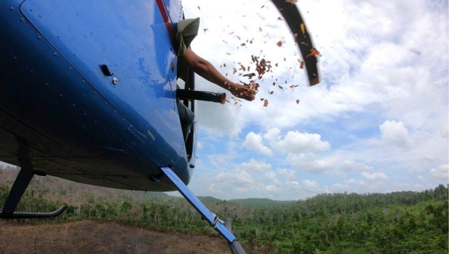 Conap dispersó más de 250 mil semillas de árboles en áreas de Petén