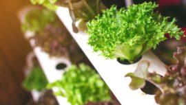 Conferencias para aprender a producir alimentos en huertos verticales | Julio 2020