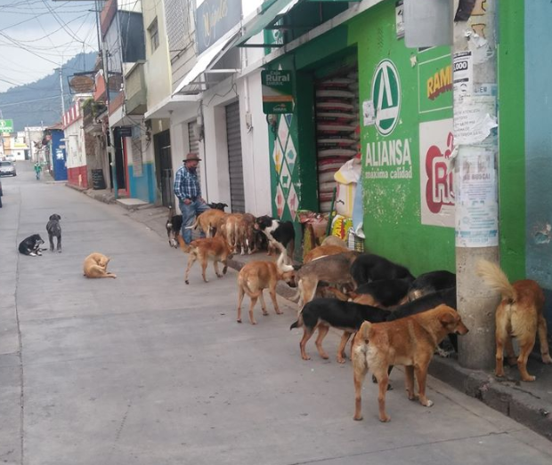 Danilo Ordóñez reparte comida a más de 50 perros sin hogar en Totonicapán