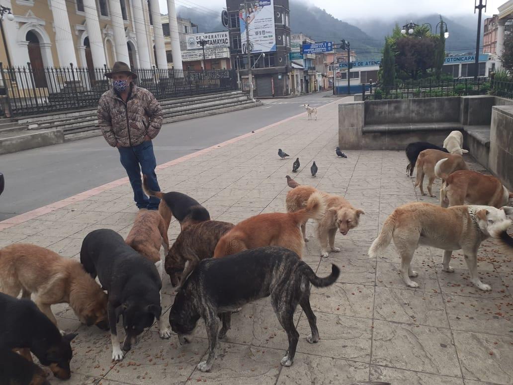 Guatemalteco alimenta a perros sin hogar en Totonicapán