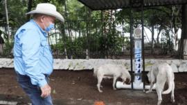 Instalaron comedores para perros sin hogar en Amatitlán en julio 2020