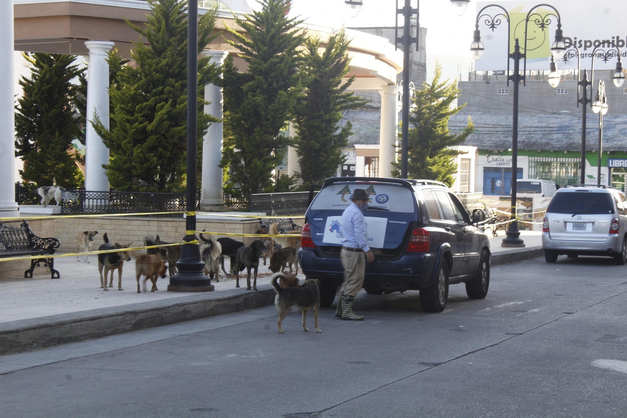 Originario de Totonicapán reparte comida a más de 50 perros sin hogar