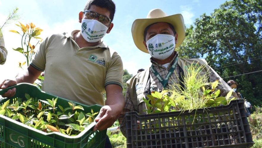 Sembrarán 300,000 árboles en los pueblos alrededor del Lago de Atitlán