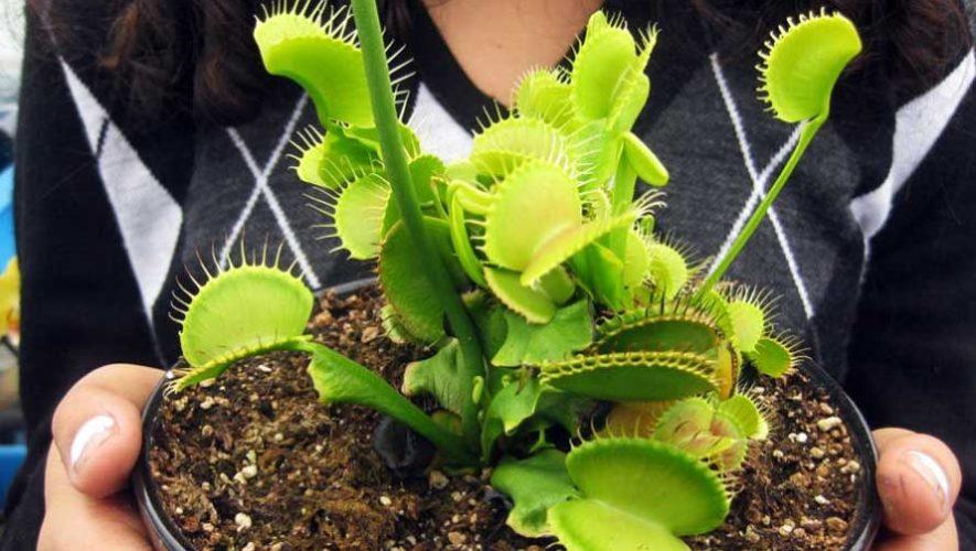 Taller gratuito para aprender a cultivar plantas carnívoras | Julio 2020