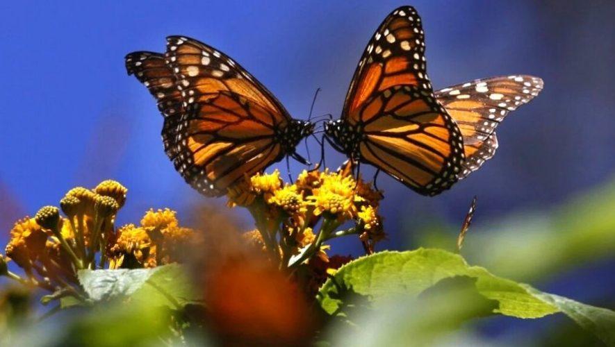 Tour fotográfico gratuito de aves y mariposas de Guatemala   Agosto 2020