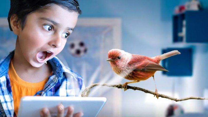Tour virtual para observar aves, especial para niños | Julio 2020
