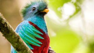 Tour virtual para observar y conocer al Quetzal | Julio 2020